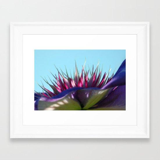 Arboretum Clematis Framed Art Print