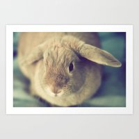 bunny Art Prints featuring Bunny by Jessica Torres Photography