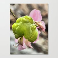 Pink Flower And Growth Canvas Print
