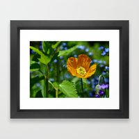 Orange Poppy Framed Art Print