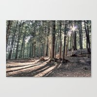 Fingers of Shadows Canvas Print