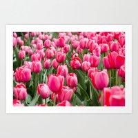 Nature Photography, Botanical Fine Art, Tulip Print, Pink Wall Art, Flower Photo, Field of Tulips Art Print