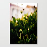 the enlightenment Canvas Print