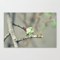 Canvas Print featuring Bud in spring by Ioana Stef