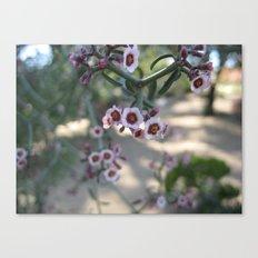 Little Purples Canvas Print