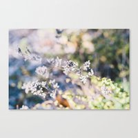 Botanical No. 1 Canvas Print