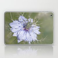 Love-in-a-Mist Laptop & iPad Skin
