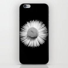Fleabane B and W iPhone & iPod Skin