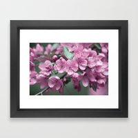 Pink Cherry Blossoms Framed Art Print
