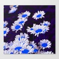 Blue Daisies Canvas Print