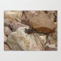 dragonfly 2016 Canvas Print