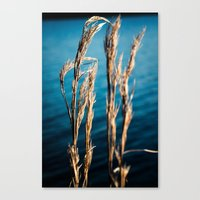 Wispy And Blue Canvas Print