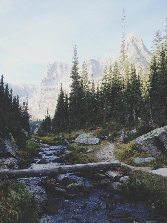Rocky Mountain Creek Art Print