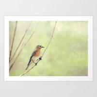Perched On A Frail Branch Art Print