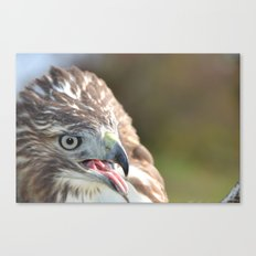 Red Tailed Hawk Close Up Canvas Print