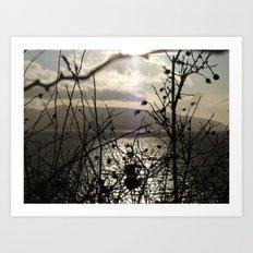 Nature Photography Art Print