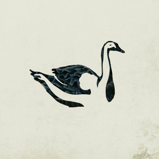 black swan song Canvas Print