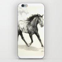 Appaloosa Stallion iPhone & iPod Skin