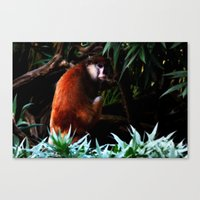 Canvas Print featuring Monkey by Denice Michalek