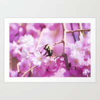 Pink Weeping Willow With Bumble Bee Art Print