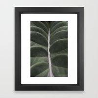 Money Plant Framed Art Print