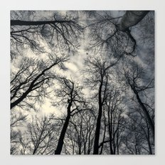 Sky-reaching Trees Canvas Print