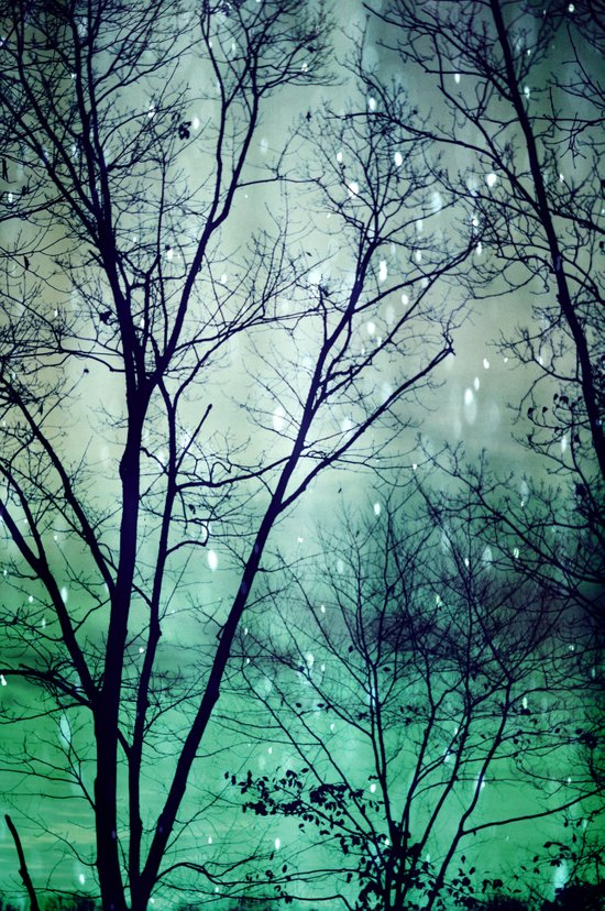 Wintergreen Twilight Art Print