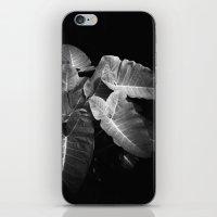 Elephant Ears in the Dark iPhone & iPod Skin