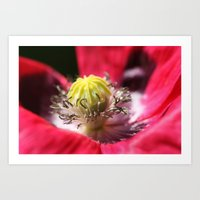 Oriental Poppy Heart Art Print