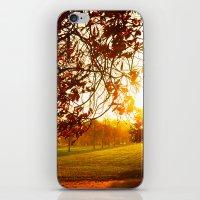 Autumn Sun iPhone & iPod Skin