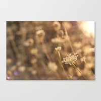 Sunflare Canvas Print