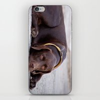 the hound dog iPhone & iPod Skin