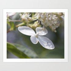 4 petal flower Art Print