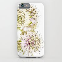 iPhone & iPod Case featuring Astrantia major by Henrietta Hassinen