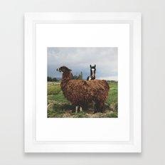 Montrose Posers Framed Art Print
