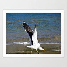 Jeffy Seagull Art Print