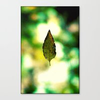 All The Leaves Are Brown… Canvas Print