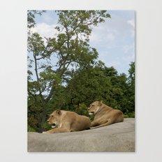 Lionesses Canvas Print