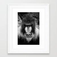 King Monkey Framed Art Print