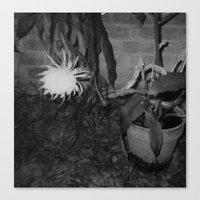 Bloomin' Midnight Canvas Print