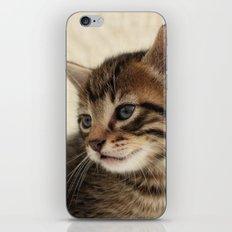 Kitten Portrait iPhone & iPod Skin