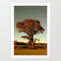 Tree- Malahide Park Art Print