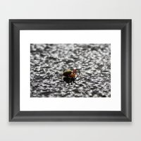 Marbled Orb Weaver Framed Art Print