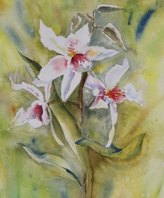 orchidée Art Print