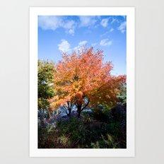 Fall Color Art Print