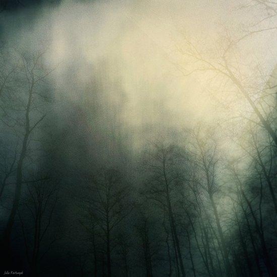 """She's got the whole dark forest living inside of her.""— Tom Waits Art Print"