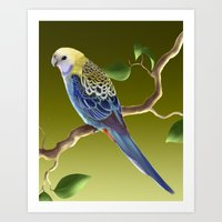 Pale-Headed Rosella Art Print