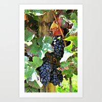 On the vine Art Print