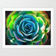 Close Up Succulent Art Print
