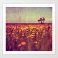 Lying In A Field Of Dais… Art Print